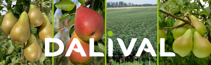 The Dalival Pears