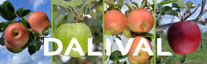 variétés pommes pommiers dalival france
