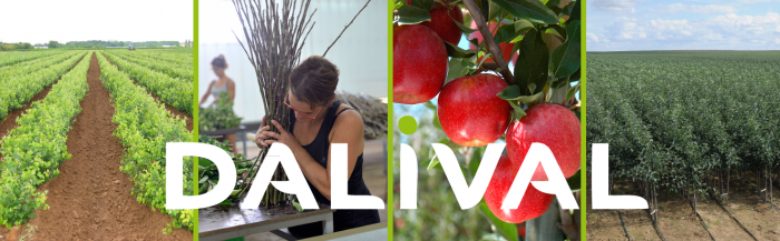 Dalival, nursery specialised in apple and pear trees and stone fruit trees (cherry, apricot, peach, nectarine and plum trees).