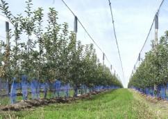 plants pour plantation