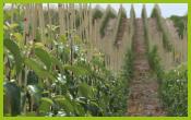 Dalival---NOS-pepinières---nos-arbres