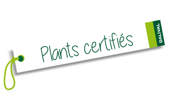 Dalival certification