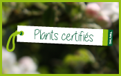 LA-PEPINIERE---certification