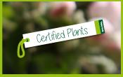 plants-certifiés-certified-plants-Vignette