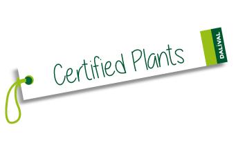 Phytosanitary certificate / passport Dalival Certified Plants