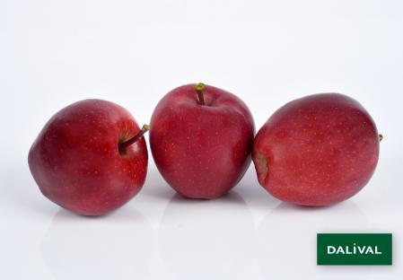 Apfel -Apfelbaum - Dalival - BUCKEYE GALA SIMMONS