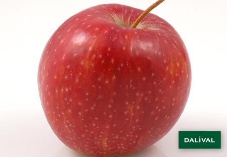 Apple - Apple tree - Dalival - DALIRYAN JONAGOLD