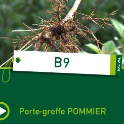 PORTE-GREFFE-DALIVAL-B9-CARRE-POMMIER