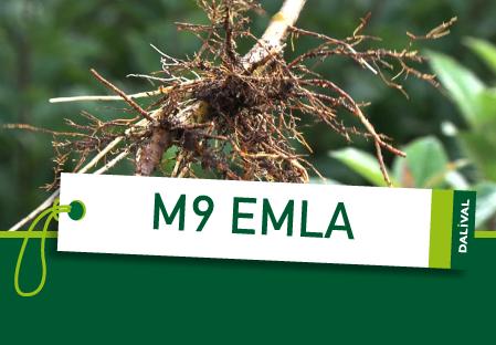 Porte-greffes M9 EMLA