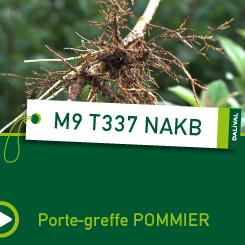 PORTE-GREFFE-DALIVAL-M9-T337-NAKB-CARRE-POMMIER