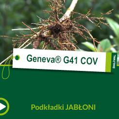 Geneva® G41 C.O_POL