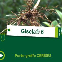 Gisela® 6_FR