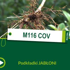 M116 COV_POL