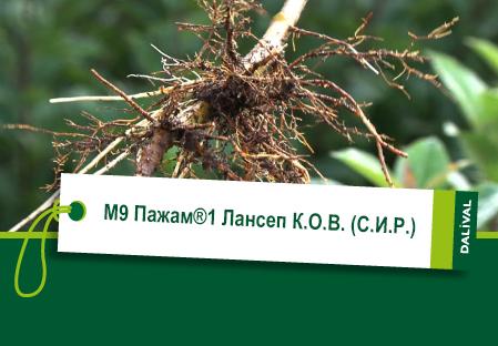 ПОДВОЙ - Даливаль - M9 Пажам 1 Лансеп К.O.В. C.И.Р.