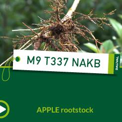 M9 T337 NAKB_EN