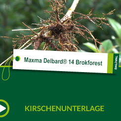 Maxma Delbard® 14 Brokforest_ALL