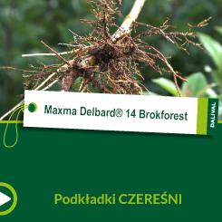 Maxma Delbard® 14 Brokforest_POL