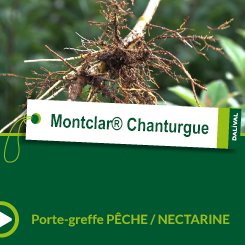 Montclar® Chanturgue_FR