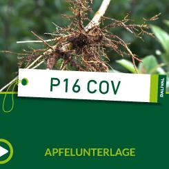 P16 COV_ALL