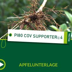 PI80 C.O.V. Supporter® 4_ALL