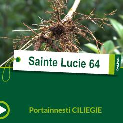 Sainte Lucie 64_IT