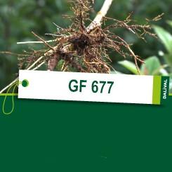 GF-677_FR1